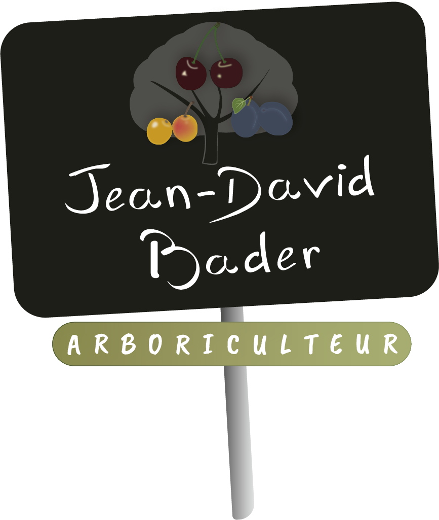 Les fruits de Jean-David