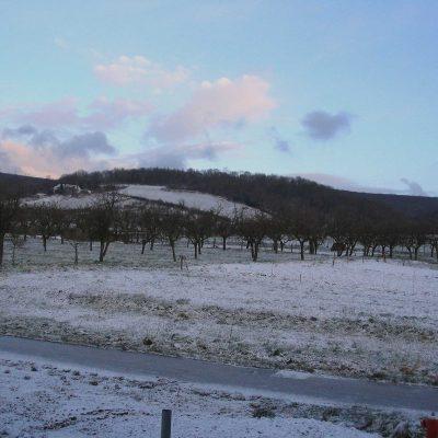 Un verger en hiver en Alsace