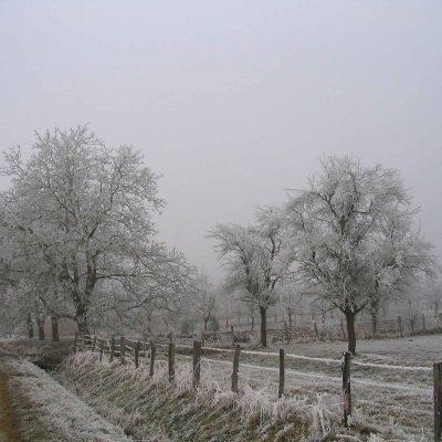 Verger et- arbres enneiges en Alsace